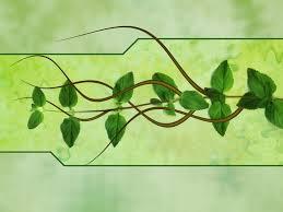 A gyógynövények csodálatos hatásai